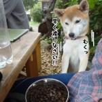 柴犬まると高尾山口「蕎麦と雑穀料理 杜々」にいってきました!
