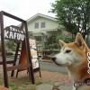 埼玉ジョンソンタウン「黒糖カフェ KAFUU」に柴犬まるといってきました!
