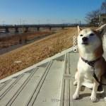 柴犬まると立川公園に遊びに行ったのにとんぼ返りした件について。