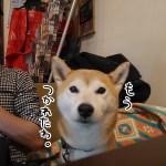 柴犬まると「旅Cafe GIFT 吉祥寺 BASE」でアヒージョを食べてきました!