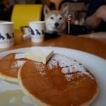 柴犬まると「DOG DEPT CAFEお台場東京ビーチ店」にいってきました!