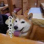 【4.26追記】立川ペットOK『松栄寿司』に柴犬まるといってきました!随時更新中!