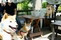 箱根で可愛い柴犬2匹に会える!「食彩工房箱根」で柴犬グッズを買ってきた!