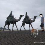 「月の砂漠記念公園」で銅像にビビる柴犬まるが可愛いくてたまらん!