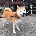 御宿で愛犬とバーベキューができる!民宿「御宿ビーチサイド」に柴犬まると泊まってきました!