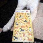 【12/6追記】100均で買った柴犬グッズを自慢する!ダイソー・キャンドゥ・seria