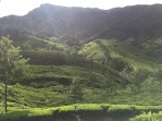 The tea fields in the mountains of Munnar.