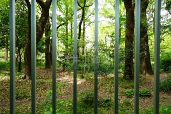 【事業用】ヨガやピラティスが似合う、靭公園に面するジャングル区画。
