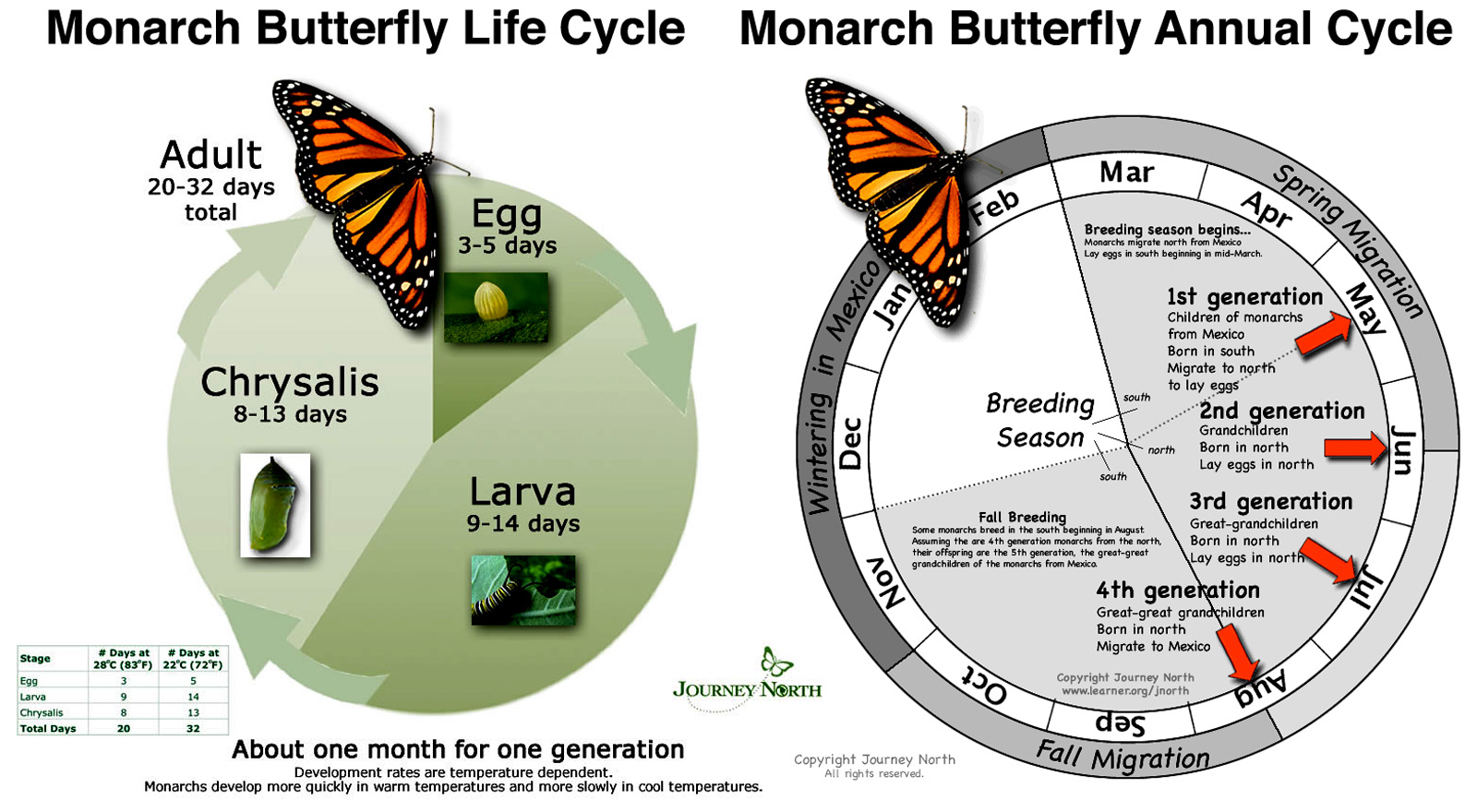 Creating And Maintaining A Monarch Sanctuary In Your Yard
