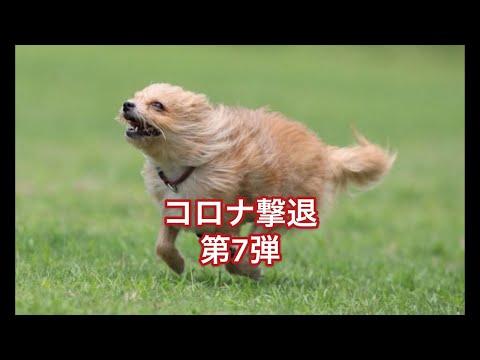 コロナ撃退第7弾