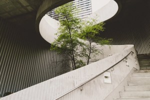 tree planted in the middle of a concrete stairwell helping make it more eco-friendly