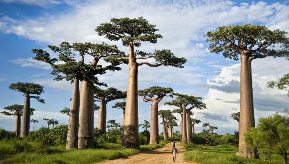 Ağaç ölümleri dünyayı tehdit ediyor!