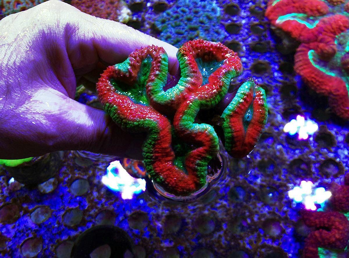 hasta-mercan-resifleri-ses-ile-tedavi-edilecek sdn 2