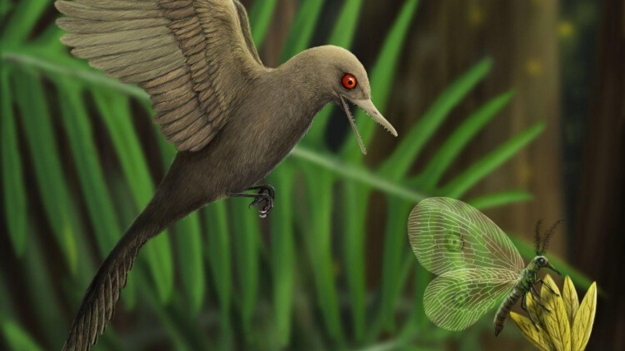 99 milyon yıl korunmuş dinazor fosili, sinek kuşu fosili