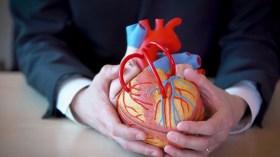 Bilim insanları laboratuvarda yapay insan kalbi geliştirdi