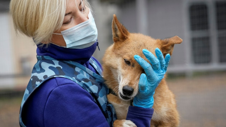 Yeni bir koronavirüs köpeklerden insanlara geçiyor.