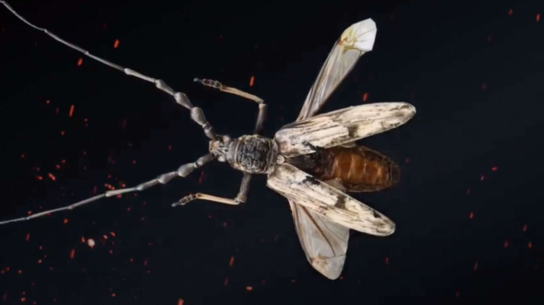 Longicorn türü Neocerambyx Gigas böcekleri