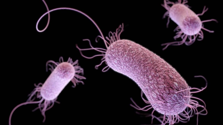 süper bakteriler