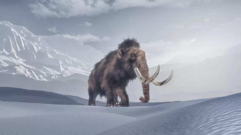 Genetiği değiştirilmiş fil yünlü mamut olacak