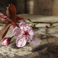 実録!ご近所トラブル~大切にしていた梅の木を切られてしまった・・・~