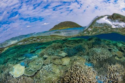 サンゴ半水面