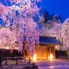 まるで夢の中!秋田県角館の桜まつり!【GWがベストシーズン】