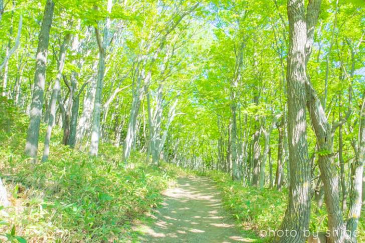 知床半島の原生林
