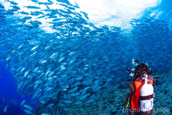 ギンガメアジの魚影