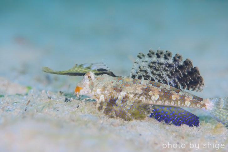 プエルトガレラ湾で見つけたイッポンテグリ