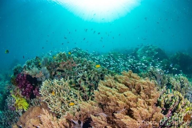 サンゴの豊かな風景
