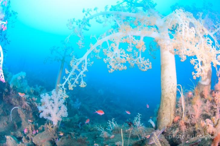 淡島のダイビング風景