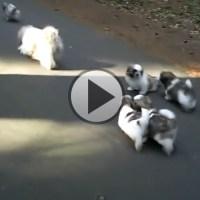Rolling Balls of Fur