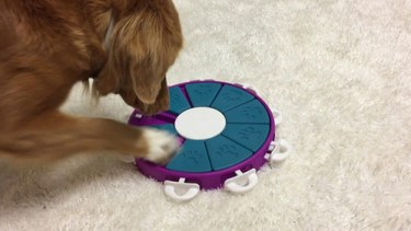 Image of dog playing with one of the best dog puzzle toys