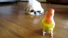 best friends shih tzu