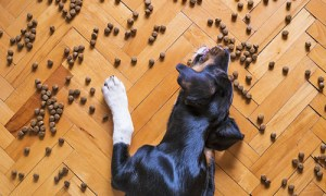 best types of dog food
