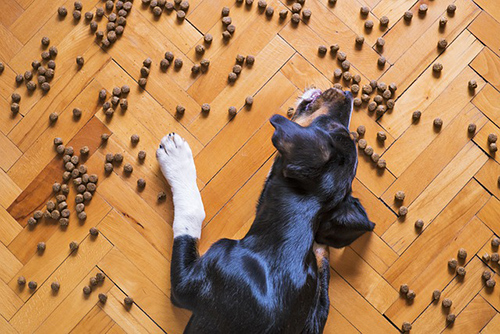 best types of dog food
