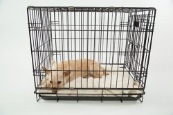 best wire dog crate: dog relaxing in wire dog crate