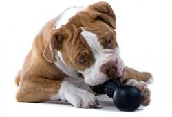 Image dog puzzle toys