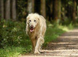 Older dog being able to walk thanks to glucosamine