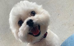 how to get your shih tzu to love you