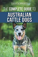 Learn every thing about the Australian Cattle Dog
