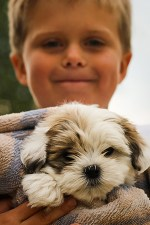 Child holding a Shih Tzu puppy