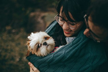 Shih Tzu and companionship