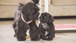 top 10 family dogs