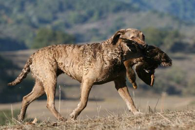 top sporting breeds