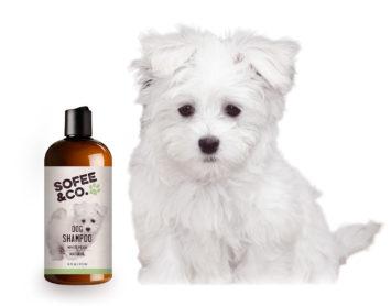 Sofee Shampoo