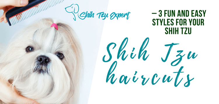 Shih Tzu haircuts – 3 Fun and Easy styles for your Shih Tzu