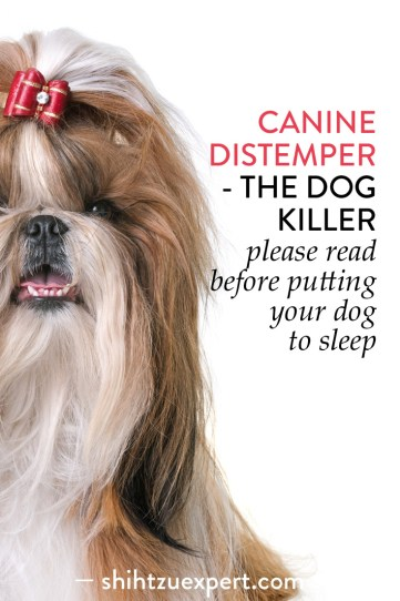 Canine Distemper-The Dog Killer