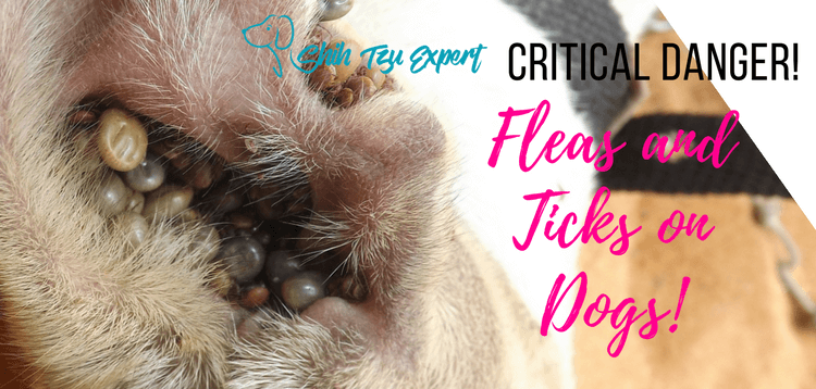 Fleas and Ticks on Dogs : How to control and the critical dangers.
