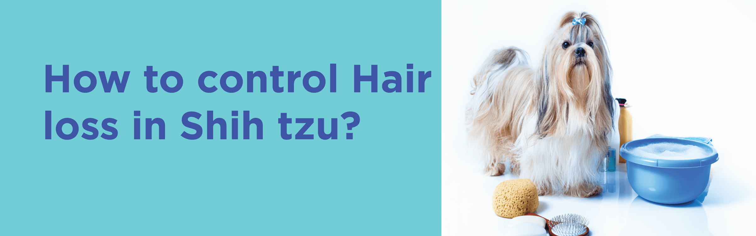 How to control Hair loss in shih tzu